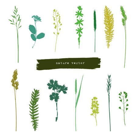 mead: Collection of summer herbs green silhouettes on white background Illustration