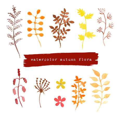 designing: Collection of watercolor autumn floral elements on white background for designing greeting cards or invitations