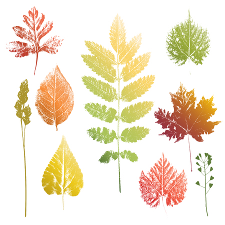 leafage: Collection of autumn colors leaves and grass imprints isolated on white background