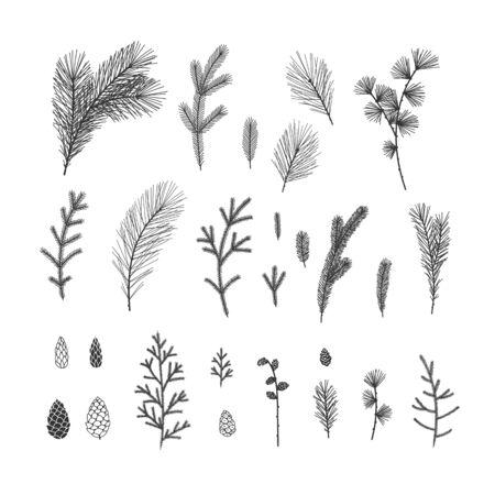 Hand drawn winter floral illustrations collection on white background Ilustração
