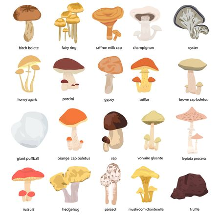 Mushrooms set. Different mushrooms of the forest isolated on the white background. Vector illustration Illustration