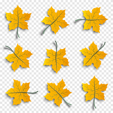 Set of realistic autumnal paper cut tree leaves with shadows isolated on transparent background, design elements for autumn season banner, poster, flyer, paper cut out art style, vector illustration