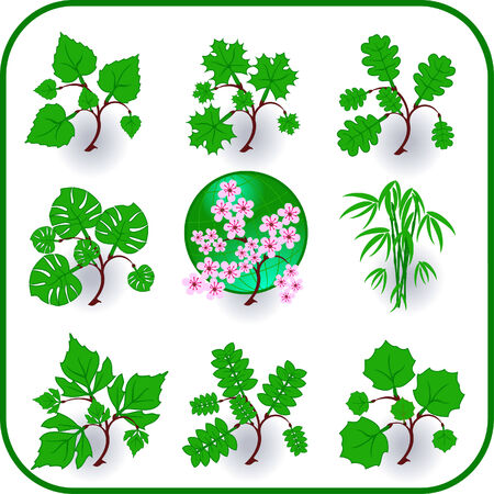 Vector - Green plants, leaves, trees icon symbol set. Stock Vector - 3726950