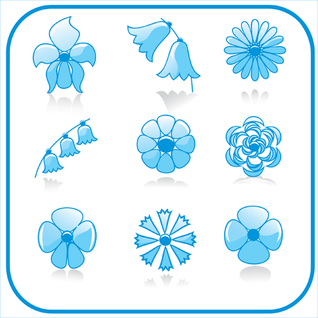 bluebells: flowers