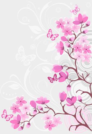 ramo di ciliegio: Cherry Blossom sfondo