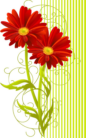 two gerbera flower background  Illustration