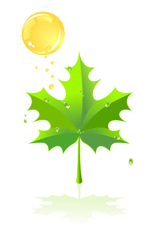 Green leaf of a maple and rain against the sun. A vector illustration Stock Vector - 4550016