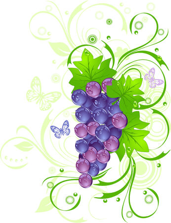 purple grapes: Grapevine with drops of water against green leaves, vector illustration