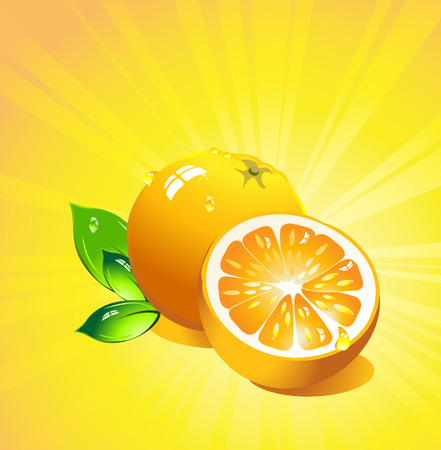 Orange citrus fruit. Vector Vector