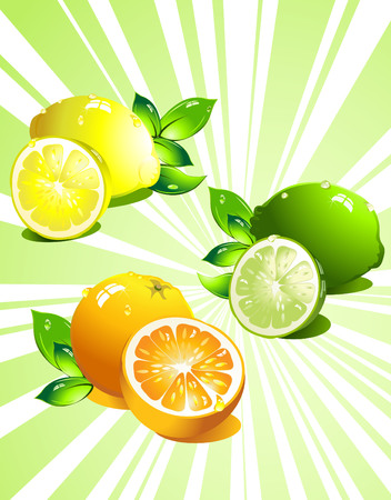 Set citrus fruit. Vector Illustration