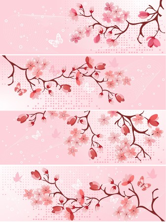 sakura flowers: Cherry blossom, banner. illustration