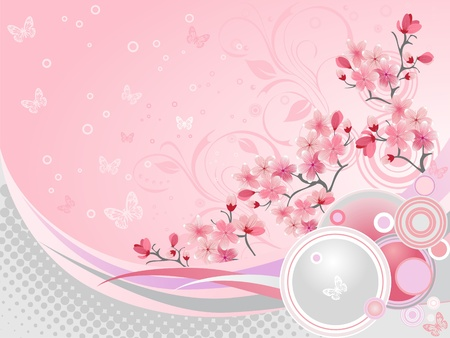 sakura flowers:  Japanese cherry blossom