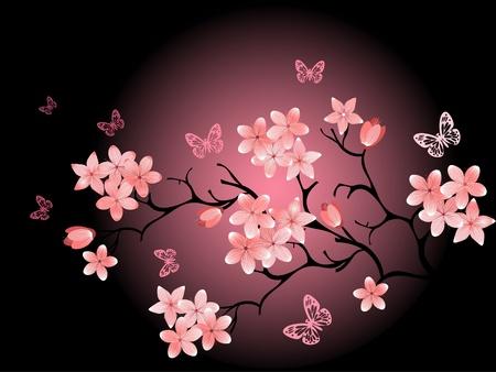 arbol cerezo: Fondo de cerezos en flor, negro Foto de archivo