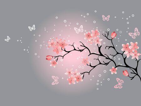 flor de cerezo: Fondo de cerezos en flor, gris