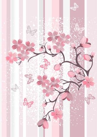sakura flowers:  Japanese cherry blossom Stock Photo