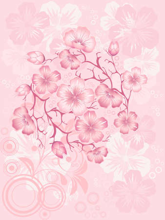 sakura  blossom illustration Vector