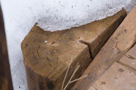 Photo the snow melts on the tree Foto de archivo