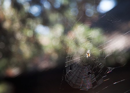 Photo cobwebs with spider in the garden in summer