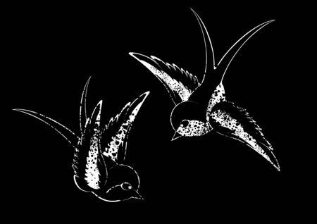black white birds Vector