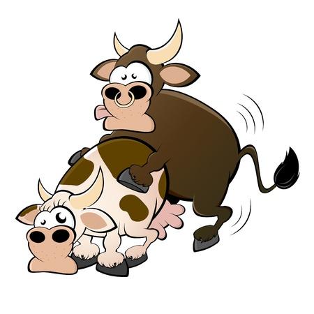 koe en stier seks