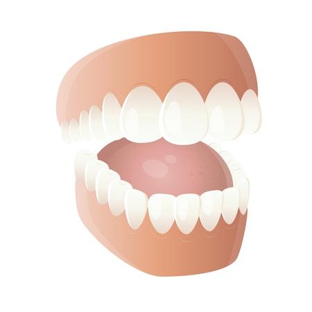 denture: funny cartoon denture