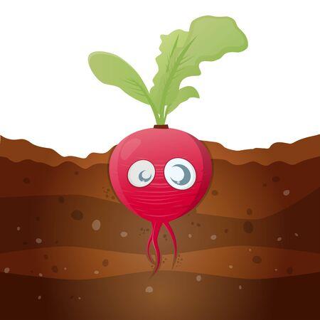 radish: funny cartoon radish