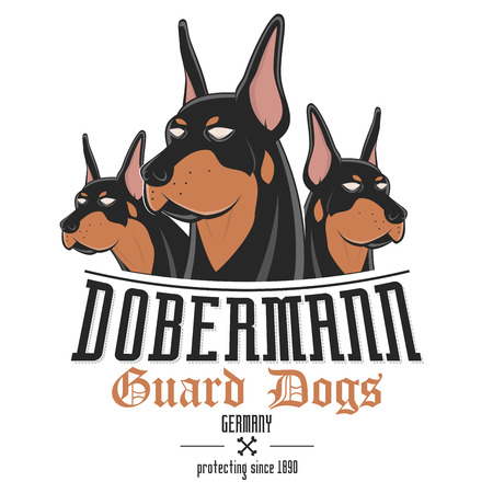 brown dobermann: dobermann dog vector illustration Illustration