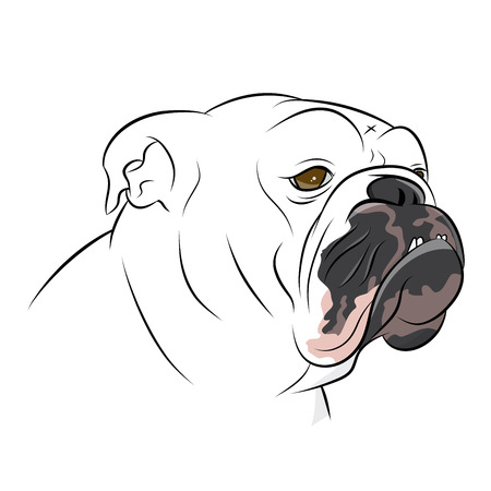 british bulldog illustration
