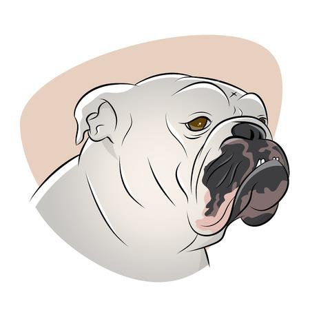 brit�nico: Ilustra��o bulldog brit�nico