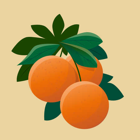 vector illustration of oranges with leaves