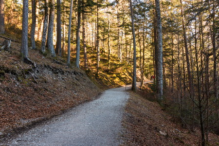 Rundweg, hiking trail around the Eibsee on the Zugspitze in Bavaria Banque d'images