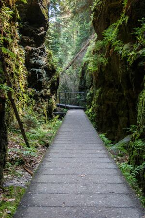 Moss-covered rock passage in the Elbe Sandstone Mountains of Saxon Switzerland