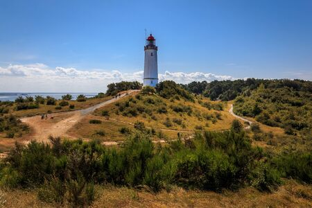 Lighthouse thornbush on the island Hiddensee
