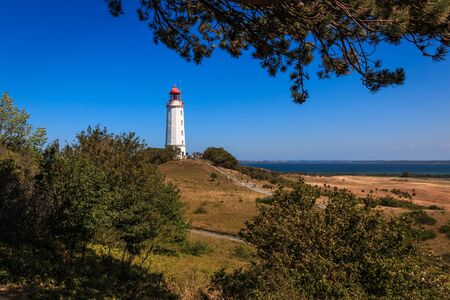 Lighthouse thornbush on the island Hiddensee on the Baltic Sea