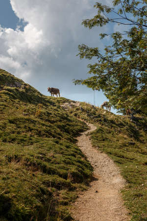 Hiking trail on the Steineberg on the Nagelfluhkette in the Allgäu Alps