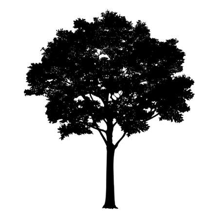 Vector tree silhouette isolated on white background. Realistic