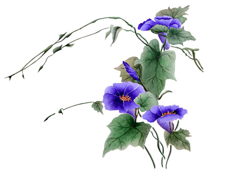 Watercolor with a flowering branch ipomoea. Beautiful purple flowers of morning glory. Illustration executed in traditional chinese style, isolated on white background. Zdjęcie Seryjne
