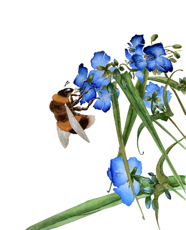 Watercolor illustration with a beautiful bumblebee that collects flowers on blue flowers. Illustration executed in traditional style, isolated on white background. Фото со стока