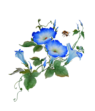 Watercolor with a flowering branch ipomoea. Bumblebee Illustration executed in hinese style, isolated on white background.