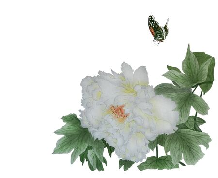 Watercolor with one large white flower peony on a branch and butterfly. Illustration executed in traditional chinese style.