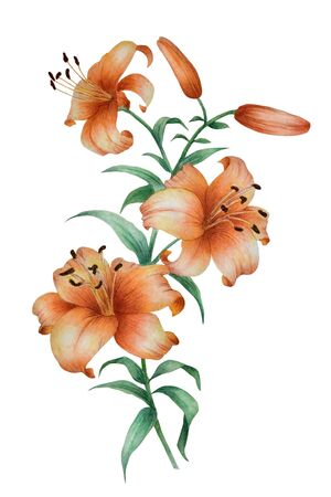 Watercolor in traditional Chinese style with the branch of flowering orange lily. Can be used as romantic background for wedding invitations, greeting postcards, prints, textile design, packaging design