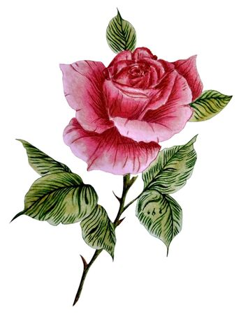 Watercolor illustration with one beautiful, red rose, isolated on white background. Can be used as romantic background for wedding invitations, greeting postcards, prints, textile design, packaging design