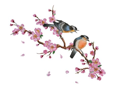 Watercolor traditional Chinese painting of flowers, cherry blossom and two birds on tree, isolated on white background. Can be used as romantic background for wedding invitations, greeting postcards, prints, textile design, packaging design