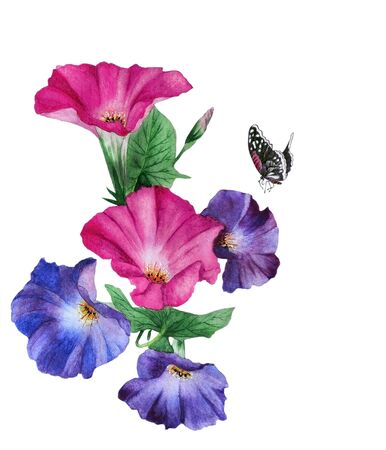 Watercolor with a flowering branch ipomoea. Beautiful lilac flowers of morning glory, bindweed, butterflies are fly near. Illustration executed in traditional ñhinese style, isolated on white background. Stock Photo