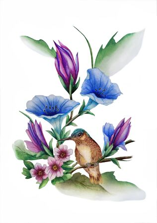 Watercolor with a flowering branch ipomoea. Beautiful blue flowers of morning glory and colibri bird. Illustration executed in traditional ñhinese style, isolated on white background.