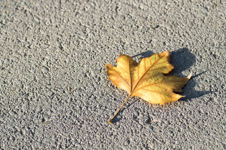 dry leaf: A yellow dry leaf on the ground Stock Photo