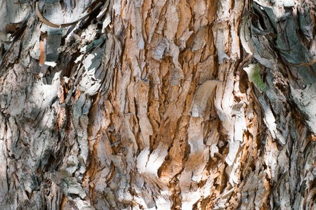 Old tree bark in close view