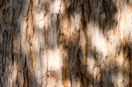 Shades and light on an old tree trunk