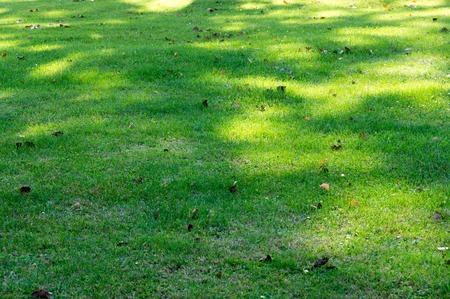 Shadow pattern on green grass