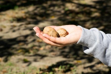 Female hand holding three walnuts